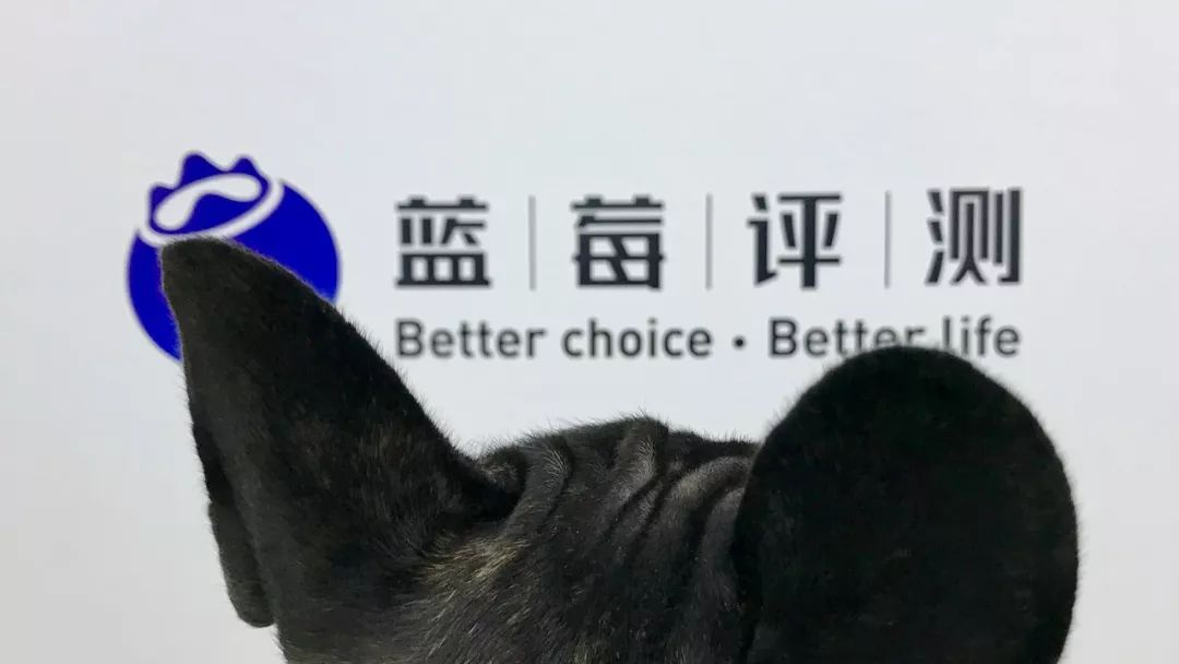 蓝莓评测 | 猫狗看病比人贵,有没有宠物能买的保险?-蓝莓评测