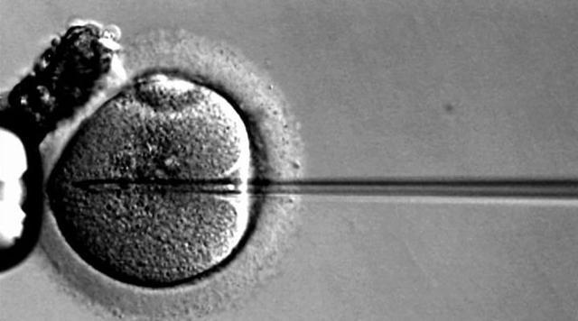 蓝莓评测 | 试管婴儿怎么做?去哪做?中美俄泰试管婴儿深度解析-蓝莓评测